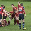 Tynedale Stumpy'd by determined Wasps