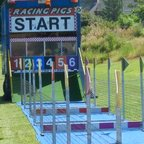 Larne RFC Pig Racing 2013