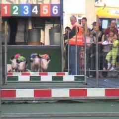 Belmullet TV -  Crazy Irish Pig Race - Main Street Belmullet ,Ireland