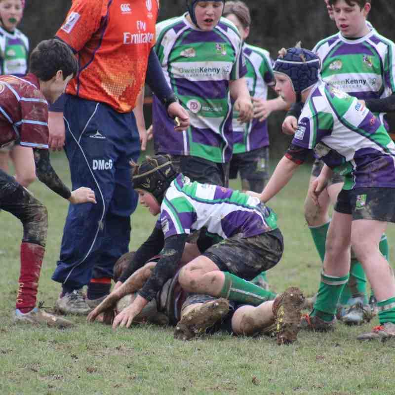 Crawley v Bognor Bulldogs