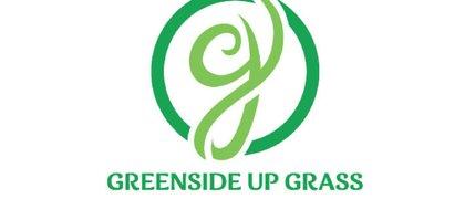 Greenside Up Grass