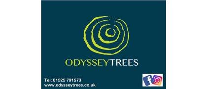 Odyssey Trees