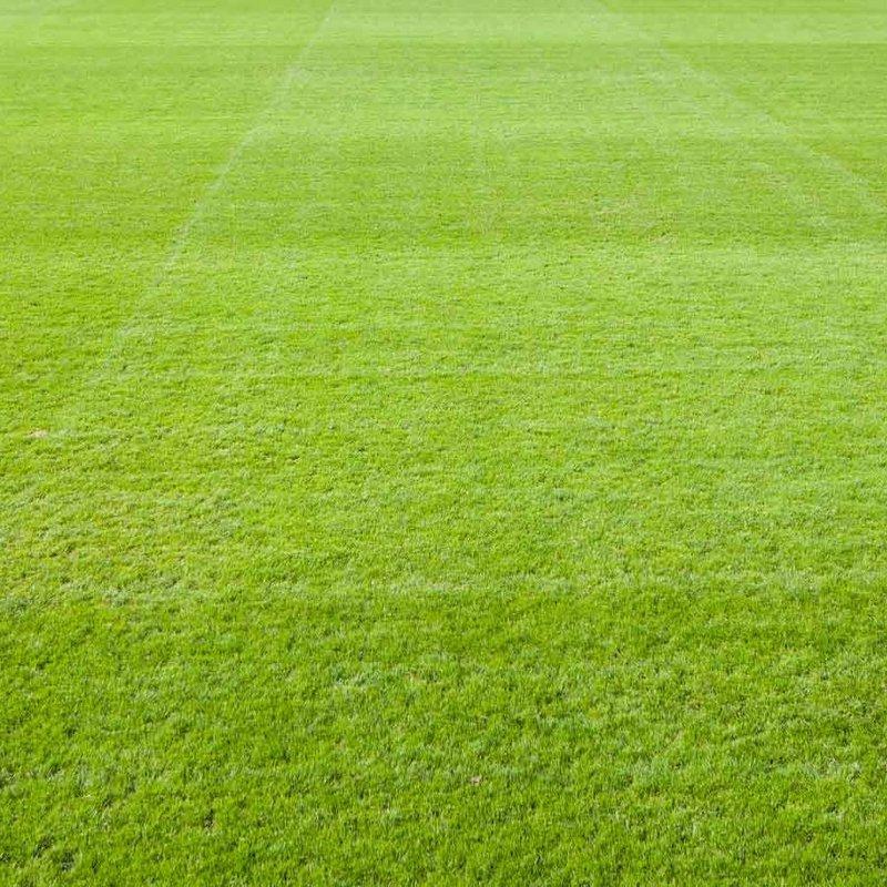 1st Team lose to Salisbury City FC 0 - 3