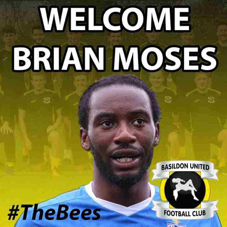 Moses Signs For The Bees !