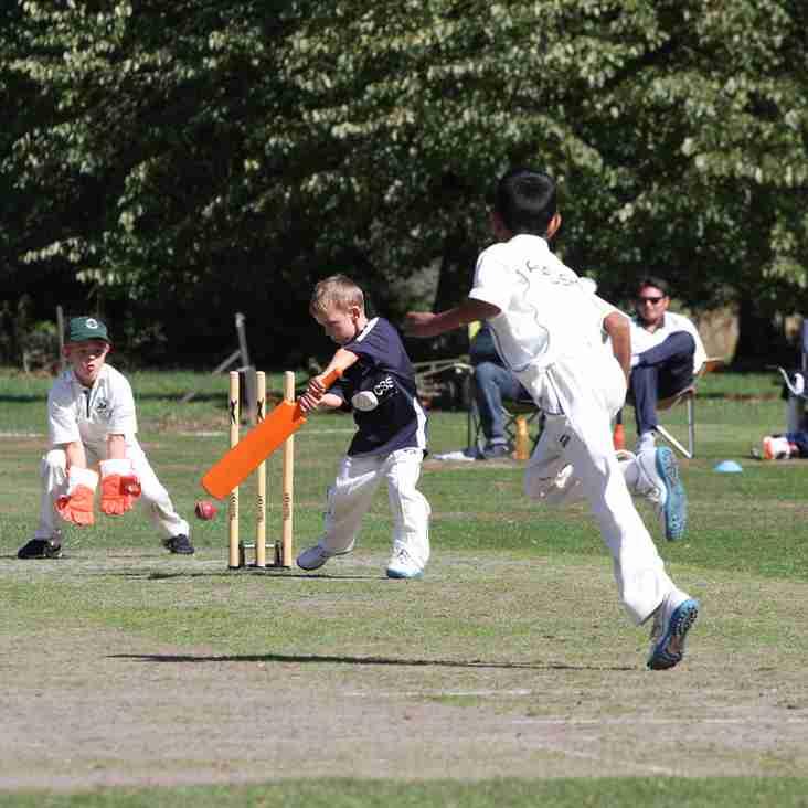 News - Falkland Cricket Club
