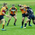 Tigers Maul Bulls in Dominant Display